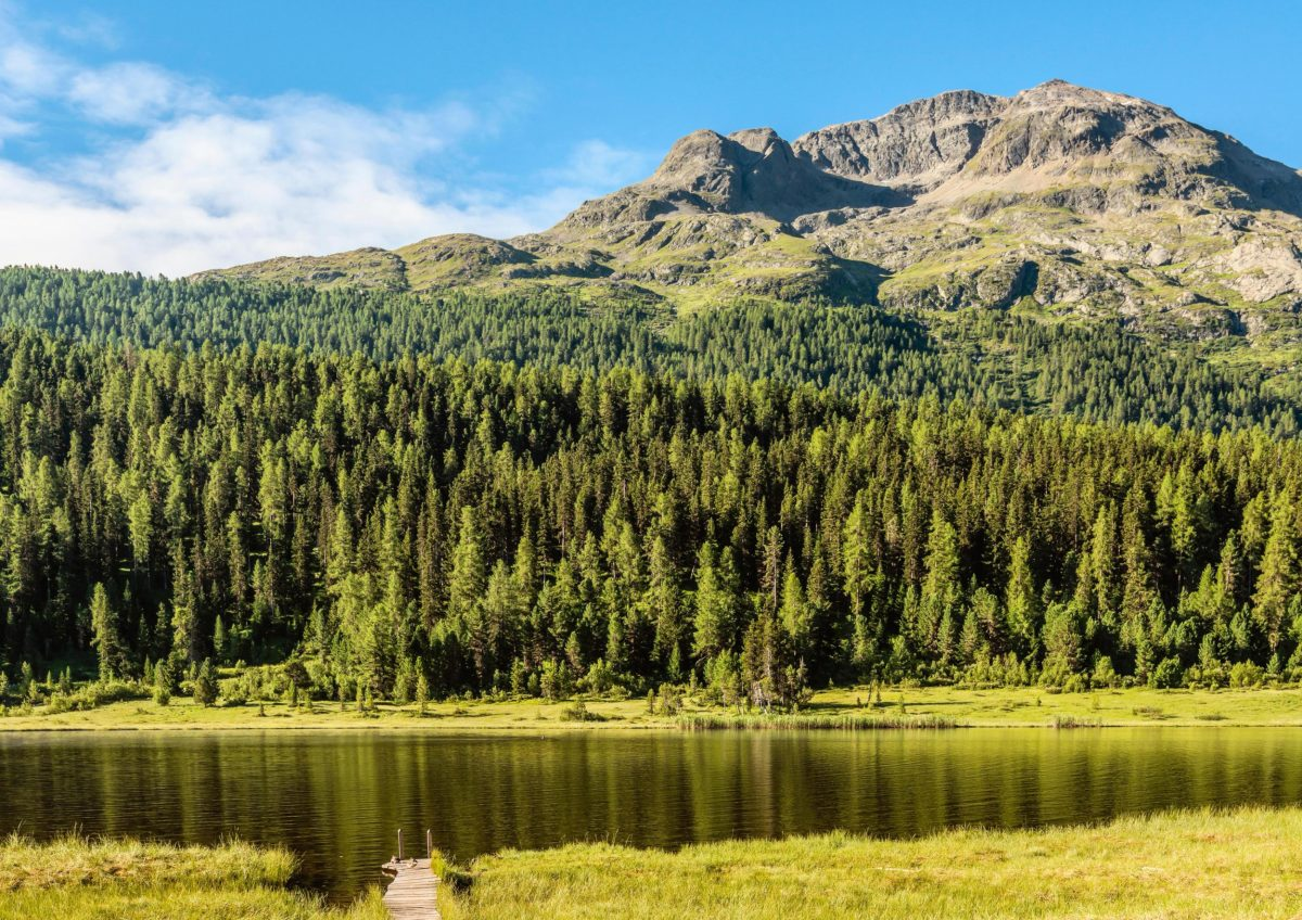 Bild von Wald und Berg