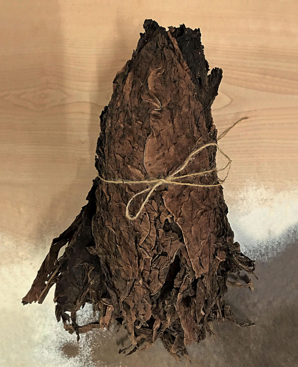 Tobacco for cigars