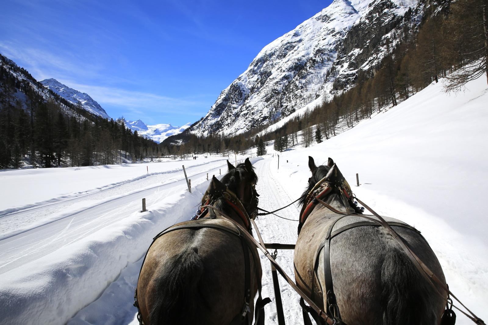 Enjoy the peace and tranquility of the Upper Engadin on a horse-drawn carriage ride